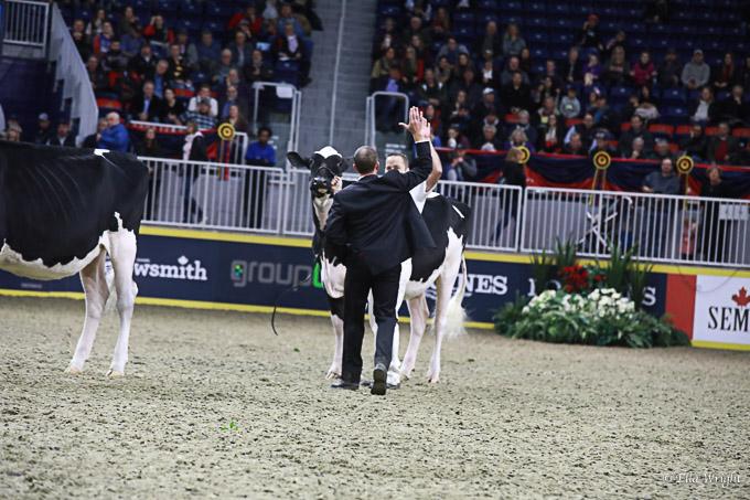 219RWF Holstein-3304