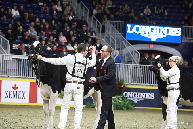 219RWF Holstein-3322