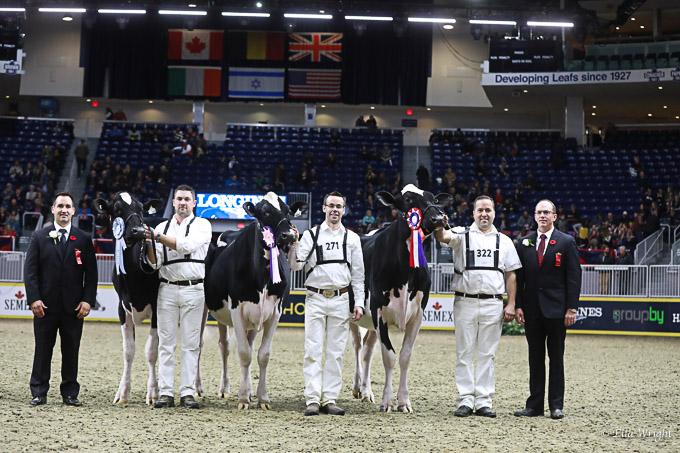 219RWF Holstein-3347