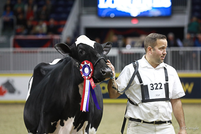 219RWF Holstein-3350
