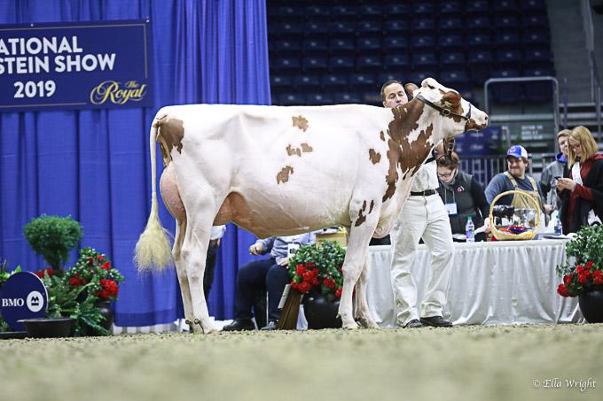 219RWF Holstein-3380