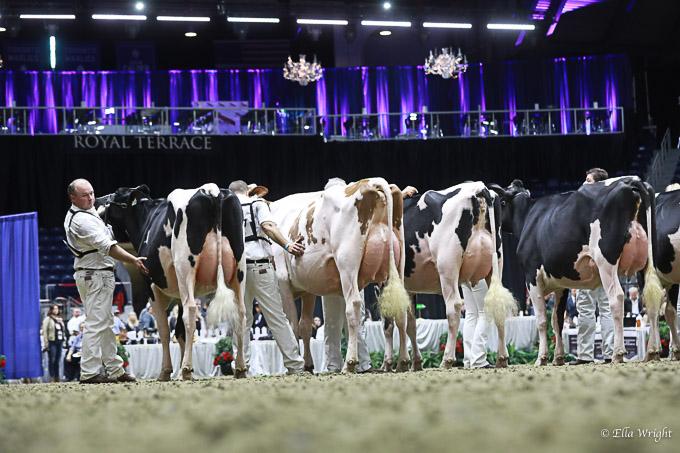 219RWF Holstein-3441