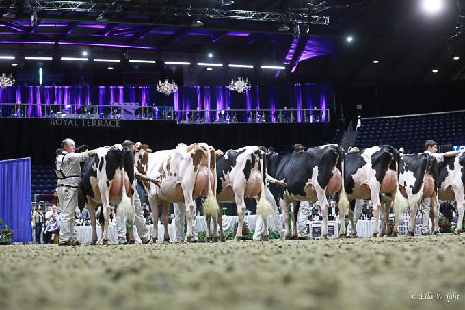 219RWF Holstein-3442