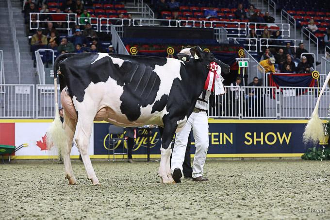 219RWF Holstein-3482