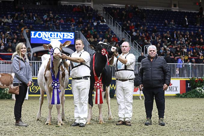 219RWF Holstein-3506