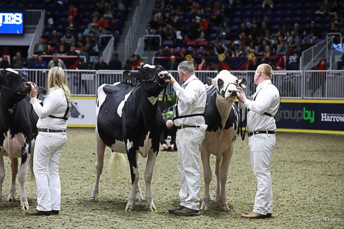 219RWF Holstein-3536