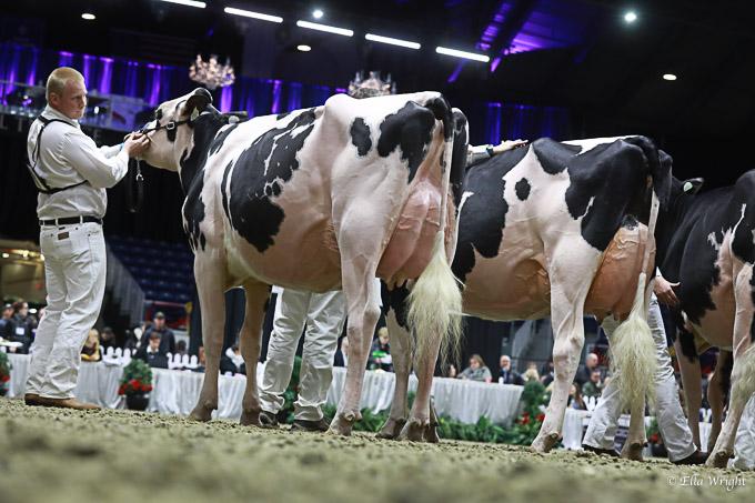 219RWF Holstein-3545