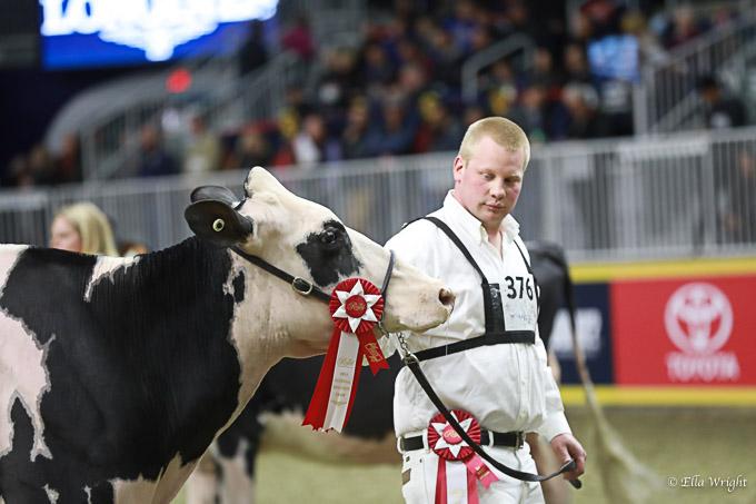 219RWF Holstein-3590