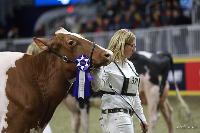 219RWF Holstein-3591