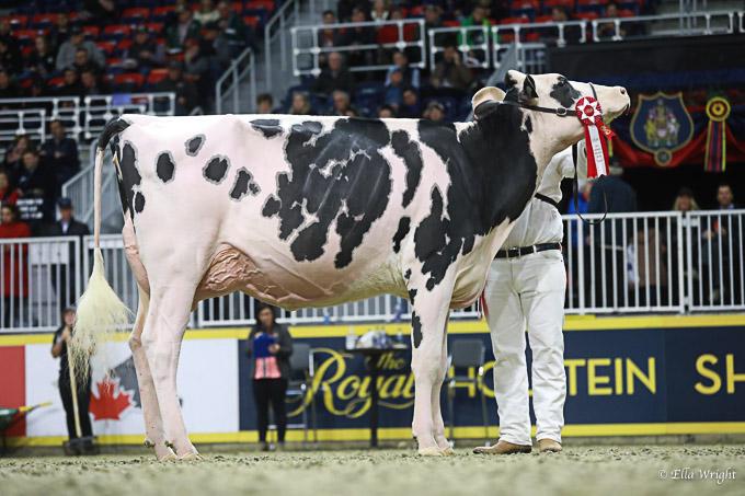 219RWF Holstein-3596
