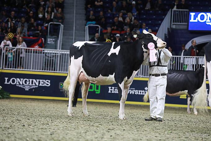 219RWF Holstein-3609
