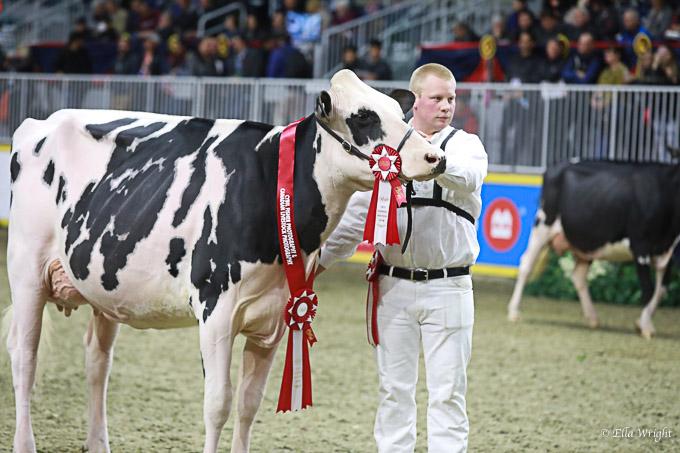 219RWF Holstein-3624