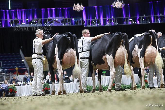 219RWF Holstein -3709