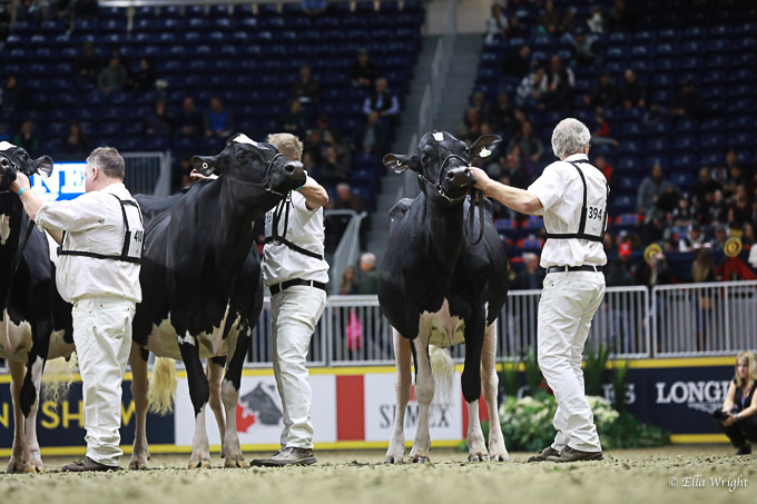 219RWF Holstein -3715