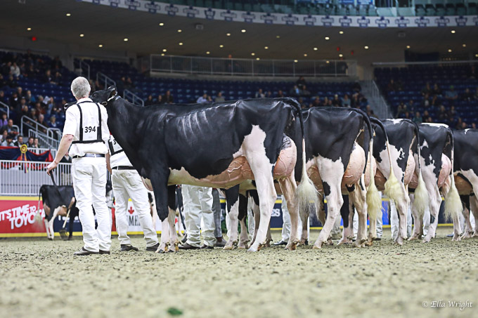 219RWF Holstein -3726