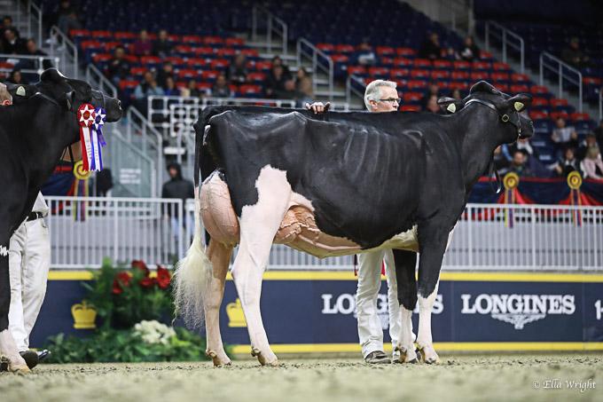 219RWF Holstein -3737