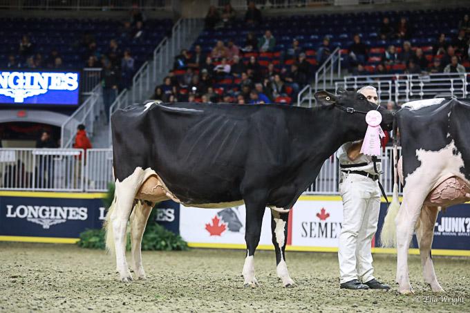219RWF Holstein -3749