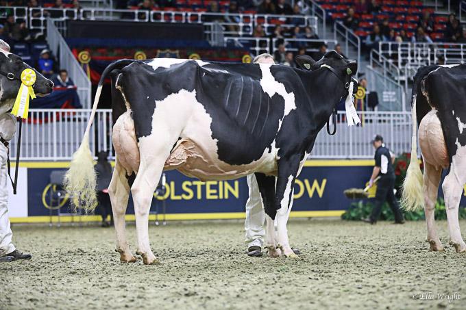 219RWF Holstein -3750