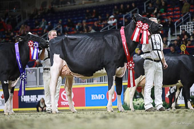 219RWF Holstein -3756