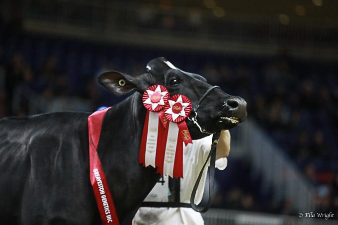 219RWF Holstein -3762