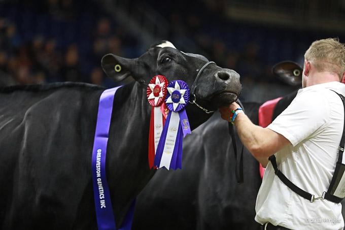 219RWF Holstein -3765
