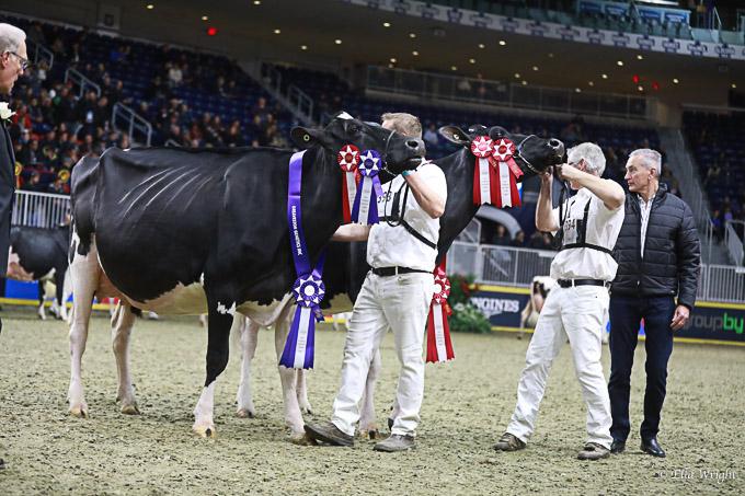 219RWF Holstein -3766