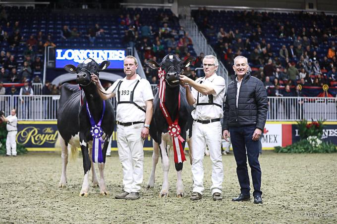 219RWF Holstein -3775