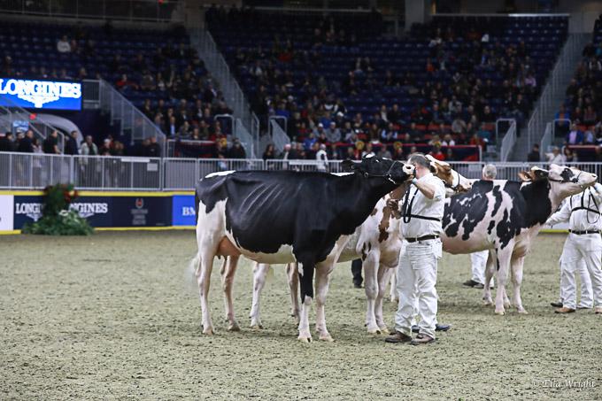 219RWF Holstein-4099