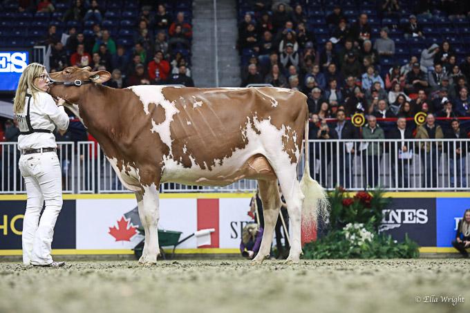 219RWF Holstein-4117