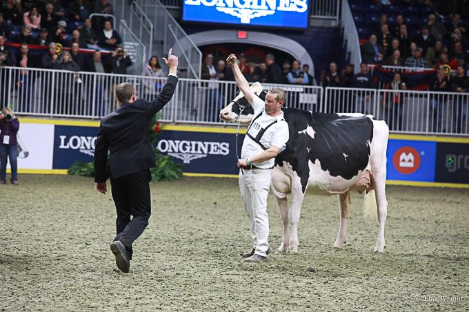 219RWF Holstein-4131