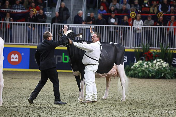 219RWF Holstein-4163
