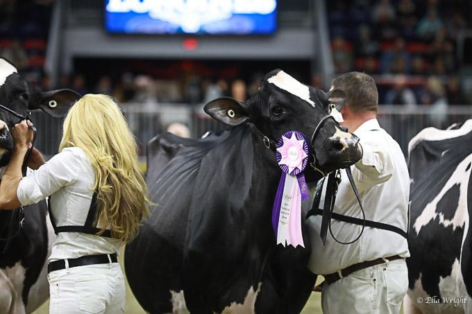 219RWF Holstein-4210