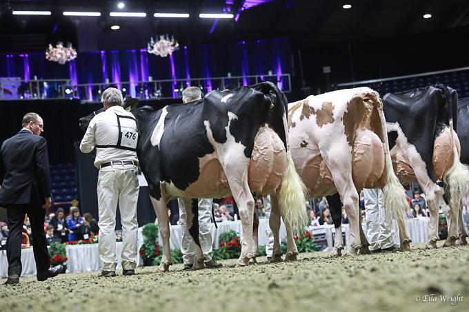 219RWF Holstein -4381