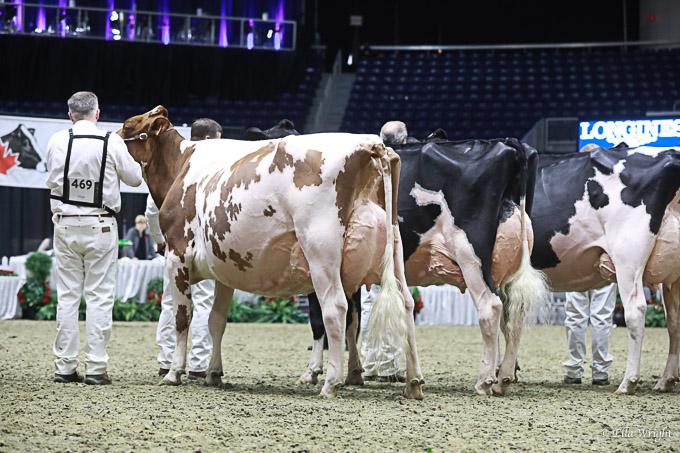 219RWF Holstein -4388