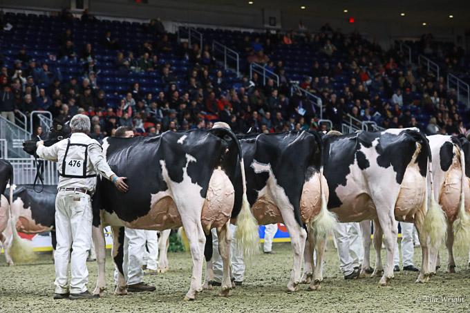 219RWF Holstein -4441