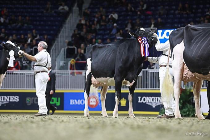 219RWF Holstein -4464