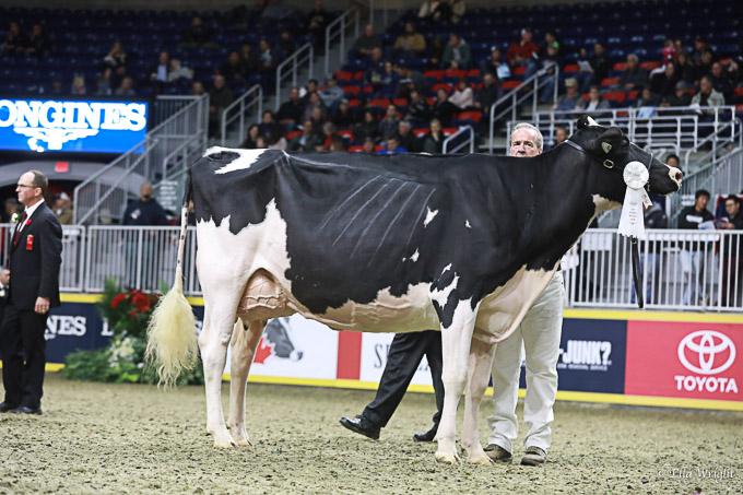 219RWF Holstein -4467