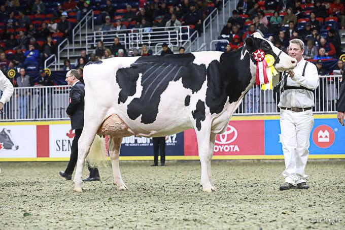 219RWF Holstein -4473