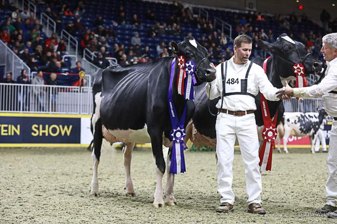 219RWF Holstein -4491