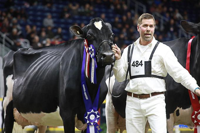 219RWF Holstein -4492