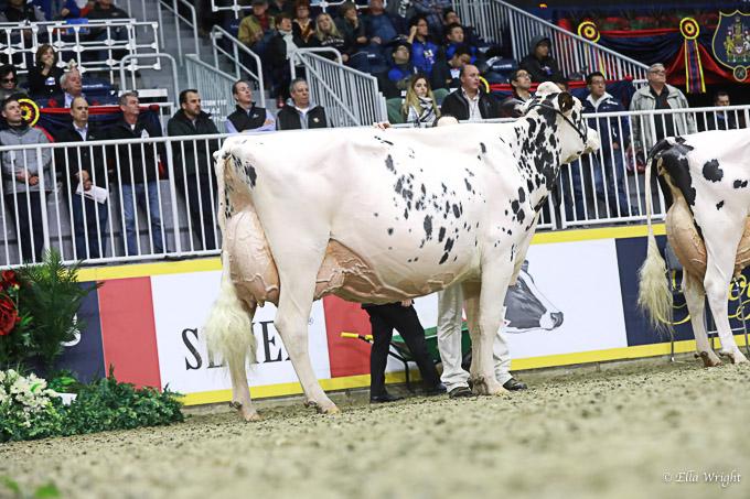 219RWF Holstein -4520