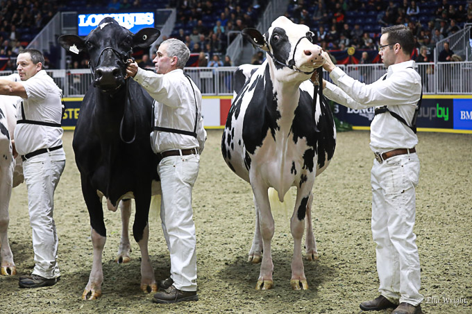219RWF Holstein -4536