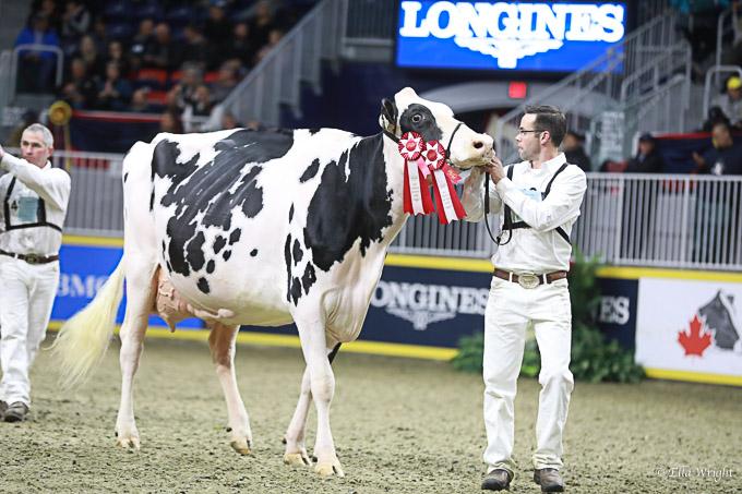 219RWF Holstein -4629