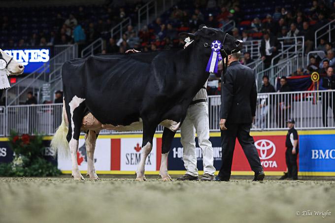 219RWF Holstein -4636