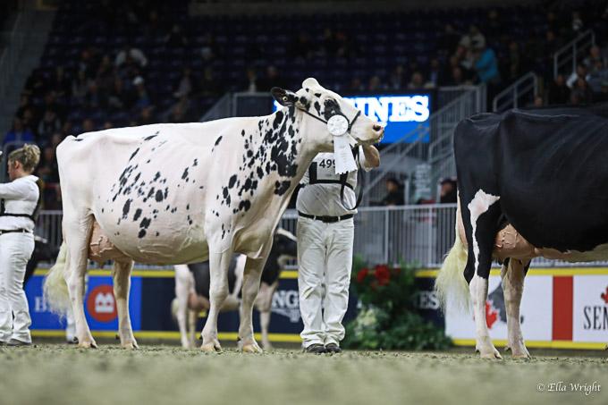 219RWF Holstein -4637