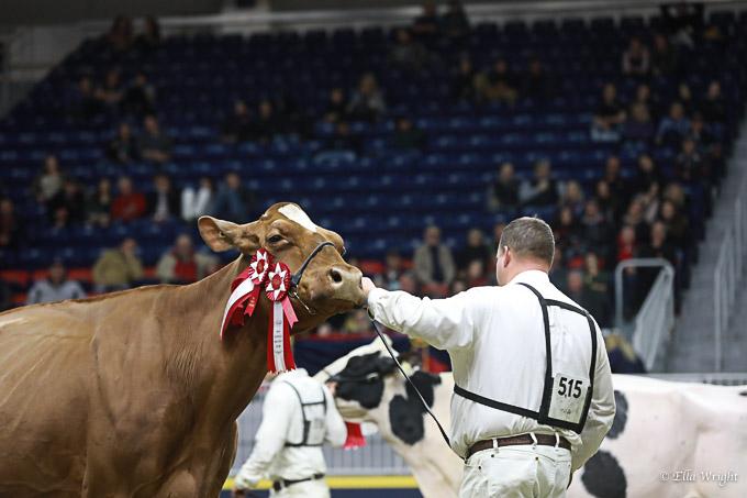 219RWF Holstein -4845