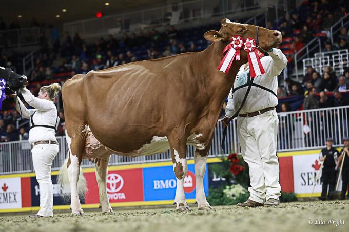 219RWF Holstein -4868