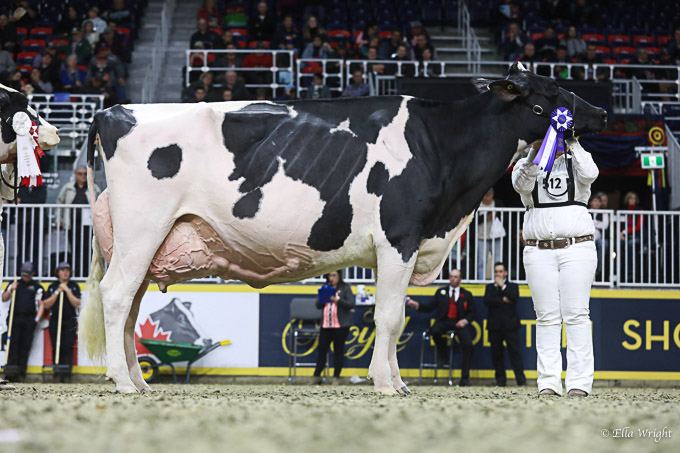 219RWF Holstein -4876
