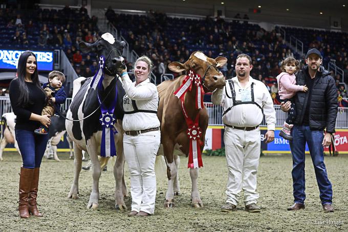 219RWF Holstein -4898