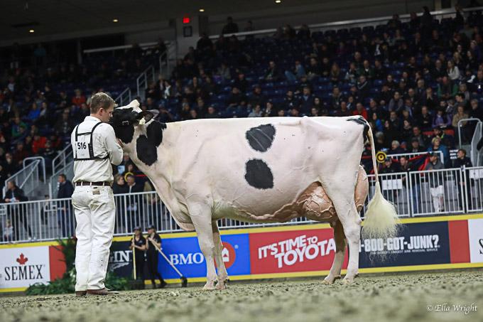 219RWF Holstein -4954